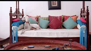 The Bahraini Saluki (Documentary)