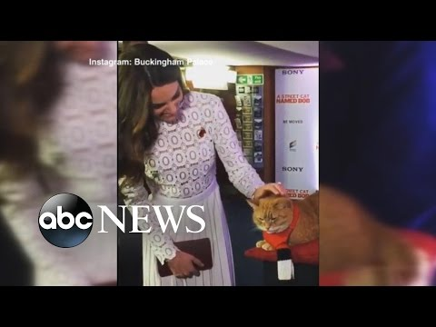 Kate Middleton Attends Premiere of the Film 'A Street Cat Named Bob'