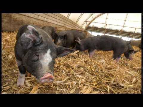 Heritage Berkshire Farm - 100% Berkshire Pork