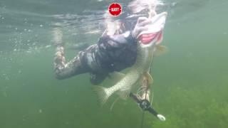 Владимир Путин поймал щуку на подводной рыбалке