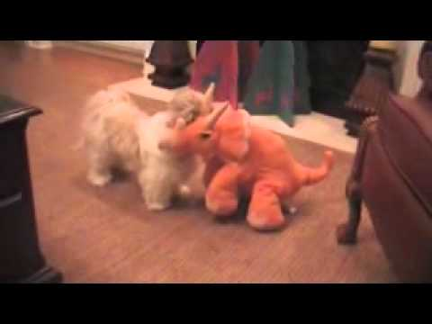 An Early Christmas Surprise For Shih Tzu Dog The Natural