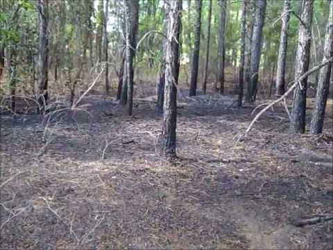 Brush Fire - Interport Drive