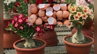 Coloque Casca De Ovo Na Sua Planta E Veja Oque Acontece