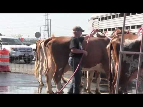 IDOT Assists Brown Swiss and Ayrshire National Convention