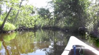 I may need a bigger canoe; there are things in the Slough (swamp) 04-16-12