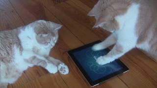 Cat fishing with iPad App