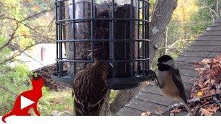 Video For Cats Birds Feeder  猫のためのビデオ 鳥の餌箱