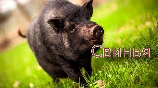 Учим домашних животных Познавательное  видео для малышей на русском и английском