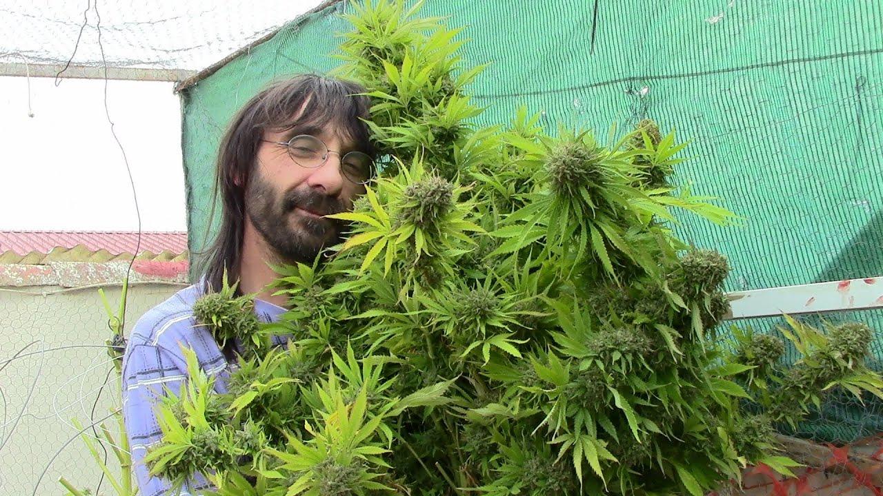 Роман с марихуаной сколько лет может хранится конопля