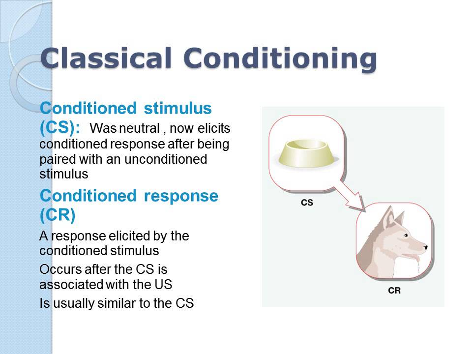 Learning classical conditioning - YouTube