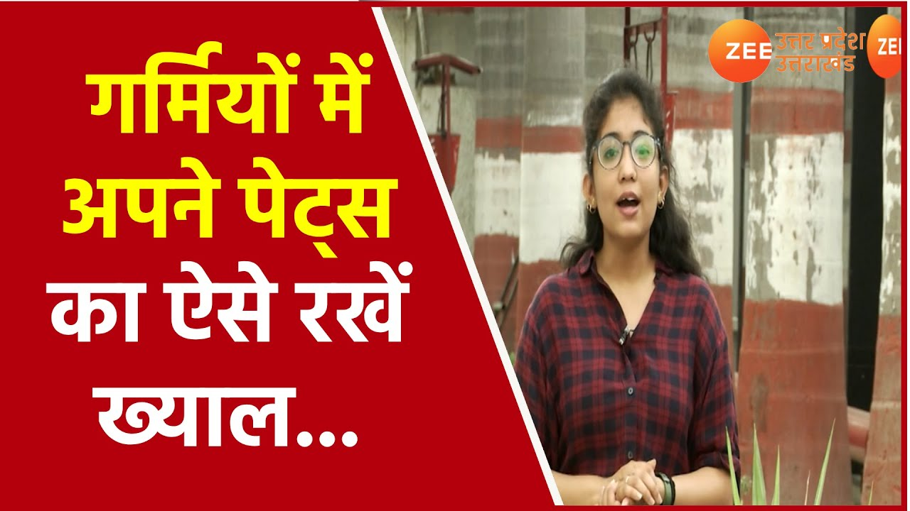 Pets care Tips  in Hindi | Summers में अपने Pets का ध्यान कैसे रखें ? | Zee UP UK Video