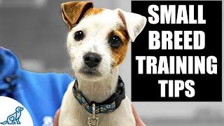 5 pasos para un buen liderazgo en el entrenamiento de cachorros de razas pequeñas