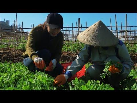 Nông nghiệp sạch số 57 - Rau đậu Hà Lan