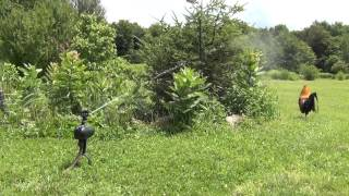 Protect Your Garden and Trees, from Chickens, Cats, Dogs, Havahart Spray Away