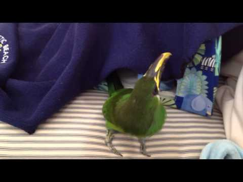 Toucan Play Tent Exploration part 2