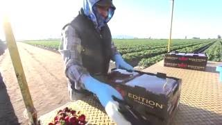Equitable Food Initiative