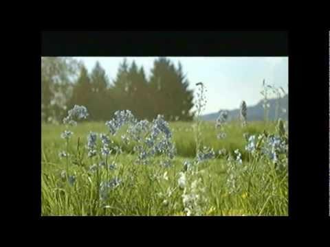 Terra Suisse Werbung Migros