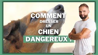 CHIEN DANGEREUX : Myhte ou réalité ? / . Esprit Dog