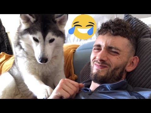 Husky Gets Angry & Refuses To Let Dad Sleep! [TRY NOT TO LAUGH]