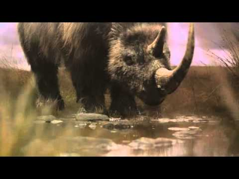 BBC Ice Age Giants trailer