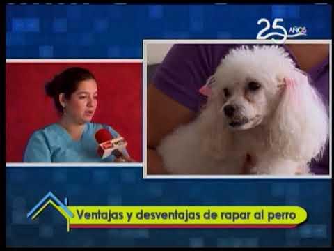 Ventajas y desventajas de rapar al perro