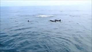 Spectacle de Dauphins, Les Baleines Rand'eau, Nosy Be