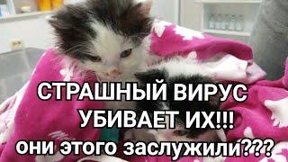 СТРАШНЫЙ ВИРУС убивает котят / панлейкопения кошек или КОШАЧЬЯ ЧУМКА - ЧУМА !!!