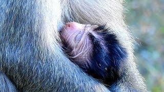 SEEING DELENA FEELING TIRED ,DEE DEE START TALK ENCOURAGE BABY WITH SOLF COMFORT