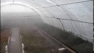 Работа системы туманообразования для зеленого черенкования(, 2016-03-16T06:58:52.000Z)