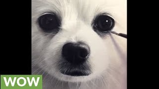 Artist creates incredibly realistic Pomeranian portrait thumbnail
