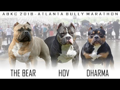 ABKC 2018 Atlanta Bully Marathon