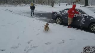 Funny animals playing in snow pitbull & bunny playing in snow cute animals playing in snow funny lol