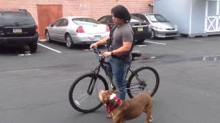 Positive Dog Training How To Train Your Dog To Bike Ride With You