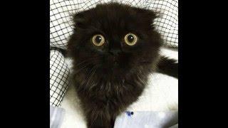 Невероятно огромные глаза у кота