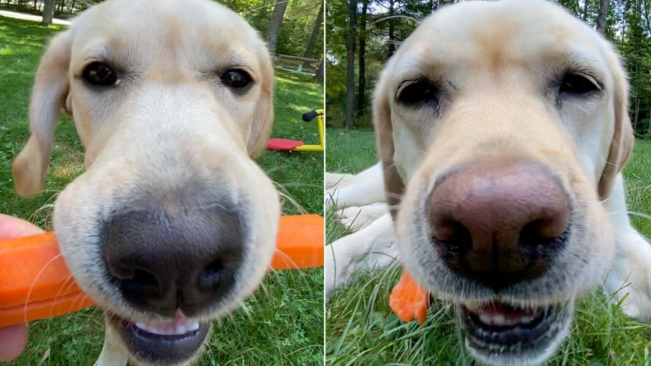 Stella and Mabel's Carrot ASMR (Dog ASMR)