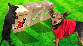Dogs DONT CHOOSE the WRONG Mystery Box (Bad Idea)