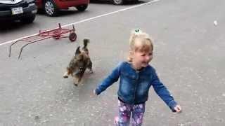 Собака напала на маленькую девочку