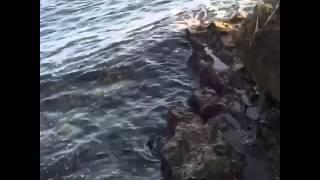 Vídeo Poema - José Antonio Maldonado