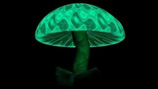10-ка самых ядовитых грибов