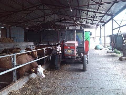 Krmení skotu | Feeding cow 2016 GoPro | Školní statek Vestec
