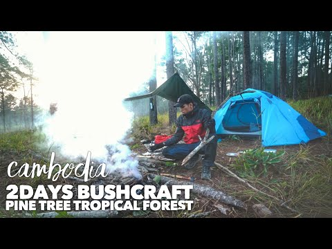 2DAYS SOLO BUSHCRAFT Overnight, Cook, Firewood, Pine tree in Tropical forest - Cambodia Ep:11