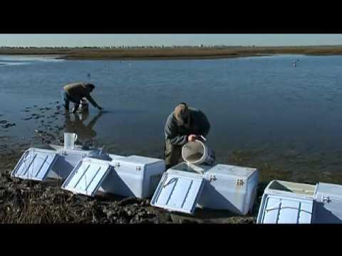 Sea Center Texas Flounder Hatchery - Texas Parks and Wildlife [Official]