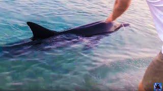 Дельфин дал себя погладить у берега Евпатории