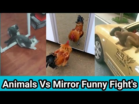 Pet's/Animal's Vs Mirror Funny Fight's | Animals funny reactions 2019 || Laugh Live Hub