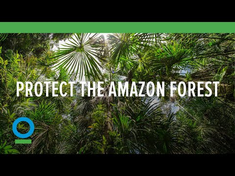 Protect the Amazon Forest