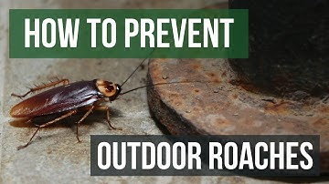 How to Prevent Outdoor Roach Invasions