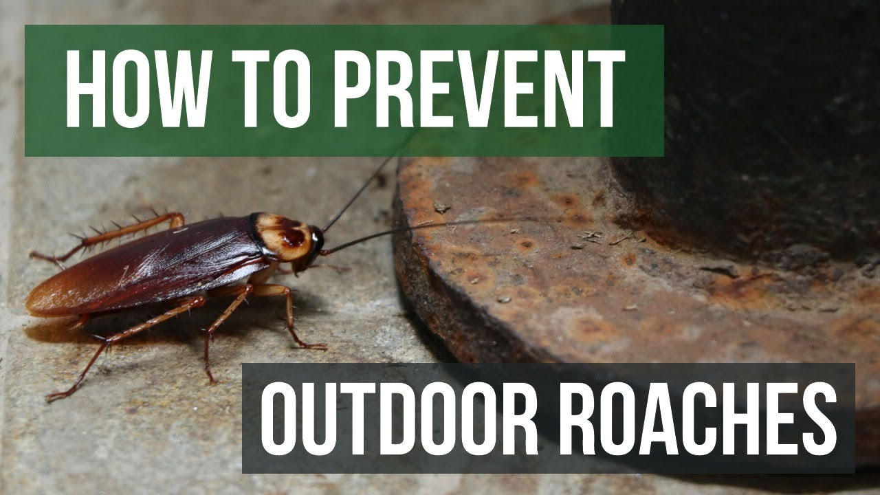 How To Prevent Outdoor Roach Invasions Youtube
