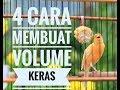 4 Cara Agar Volume Kenari Menjadi Keras  Tembakan(.mp3 .mp4) Mp3 - Mp4 Download