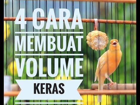 Download Lagu 4 CARA AGAR VOLUME KENARI MENJADI KERAS