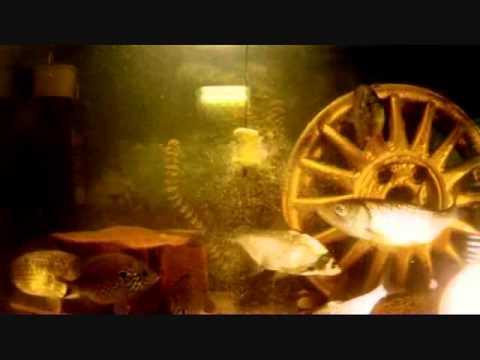 технопланктон изготовление рецепты под пресс